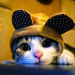 Vì Sao Bạn Nên Chọn Cho Mình Một Chú Mèo Ở Trong Nhà? 14