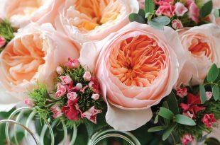 Hoa hong juliet 310x205 - Những loài hoa đắt nhất thế giới