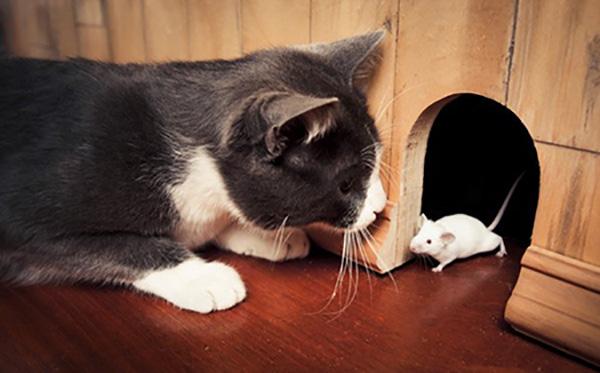 Vì Sao Bạn Nên Chọn Cho Mình Một Chú Mèo Ở Trong Nhà? 4