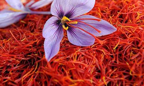 Nhuy hoa nghe tay - Những loài hoa đắt nhất thế giới