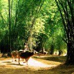 Những Địa Điểm Du Lịch Cuối Tuần Giữa Thành Phố Hồ Chí Minh 18