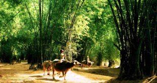 Những Địa Điểm Du Lịch Cuối Tuần Giữa Thành Phố Hồ Chí Minh 36