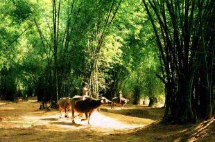 Những Địa Điểm Du Lịch Cuối Tuần Giữa Thành Phố Hồ Chí Minh 30
