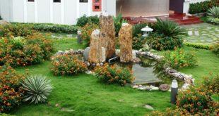 chon cay trong trong nha cho nguoi ban ron 310x165 - Chọn Cây Trồng Sân Vườn Cho Người Bận Rộn