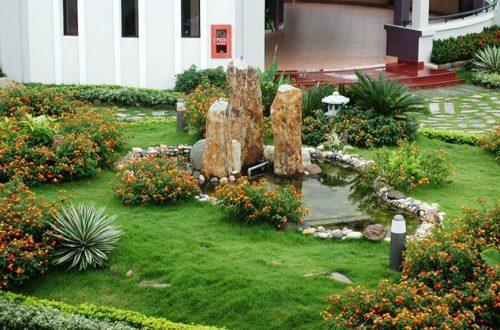 Chọn Cây Trồng Sân Vườn Cho Người Bận Rộn