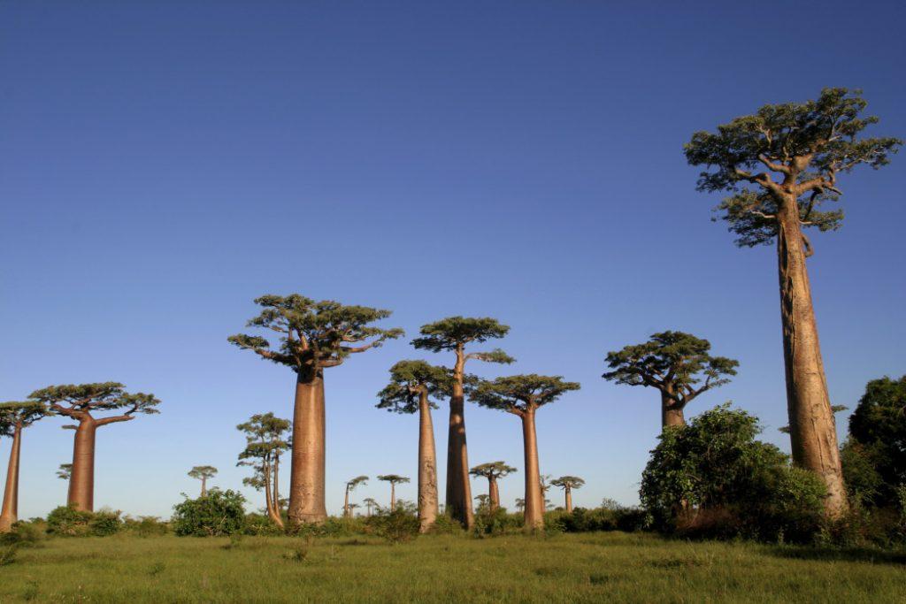 Madagascar chau phi 1024x683 - 12 Điểm Đến Phù Hợp Hoàn Toàn Với 12 Chòm Sao
