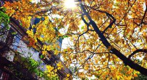 Top 10 địa điểm chụp ảnh đẹp nhất ở Hà Nội vào mùa thu