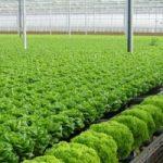 Top 10 địa chỉ bán rau hữu cơ uy tín nhất tại Hà Nội