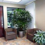 Top 10 địa chỉ mua cây xanh văn phòng giá rẻ và đẹp nhất tại TPHCM