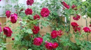 Top 10 Bài văn tả cây hoa hay nhất