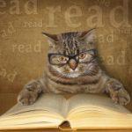 Top 10 Giống mèo thông minh nhất thế giới