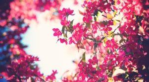 Top 10 Loại hoa đẹp nhất và ý nghĩa của chúng