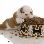 Top 10 Thức ăn cho chó tốt nhất