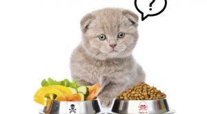 Top 10 Thức ăn cho mèo tốt nhất
