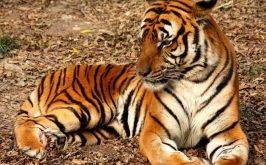 Top 12 Loài động vật hoang dã sắp bị tuyệt chủng trên thế giới