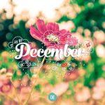 Top 26 Bài thơ hay viết về tháng 12