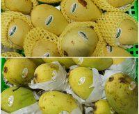 Top 4 Cửa hàng thực phẩm sạch uy tín và chất lượng nhất Yên Bái