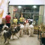 Top 5 Quán cà phê thú cưng siêu đáng yêu tại Sài Gòn