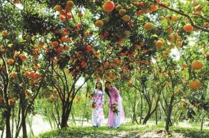 Top 5 Vườn trái cây nổi tiếng nhất tại Cần Thơ
