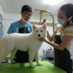 Top 6 Phòng khám thú y uy tín và  đảm bảo nhất tại Đà Nẵng