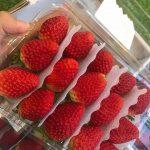 Top 6 Cửa hàng trái cây sạch và an toàn tại quận Gò Vấp, TP. HCM
